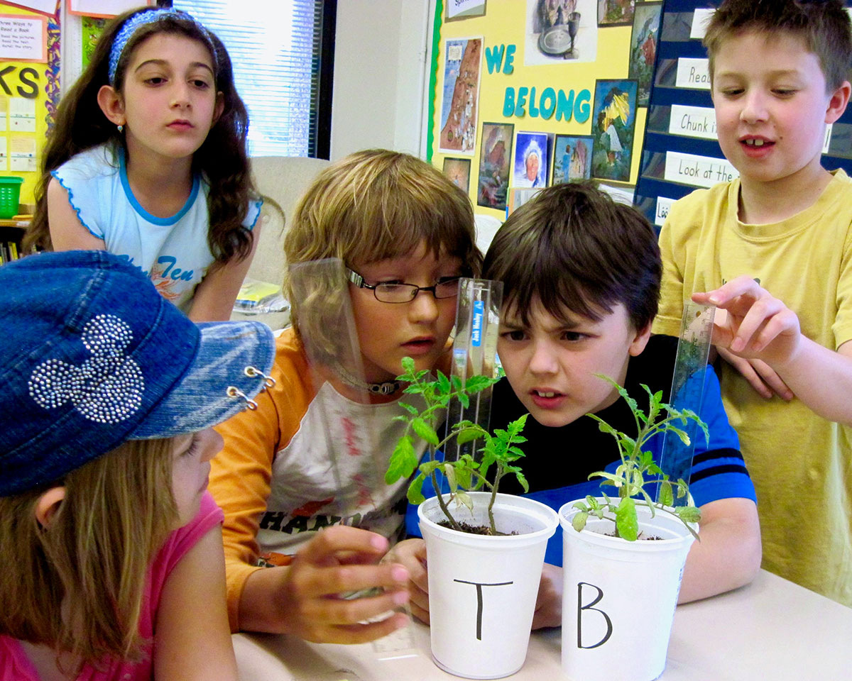 Students measuring height of tomatosphere plant from seeds flown in space