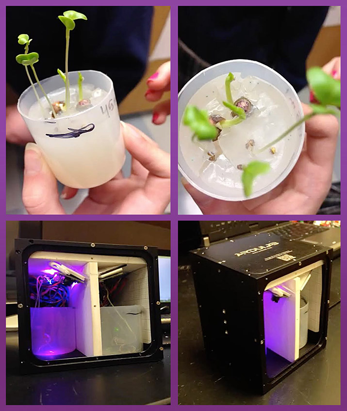 An experiment to compare plant growth under different mixtures of red and blue lights