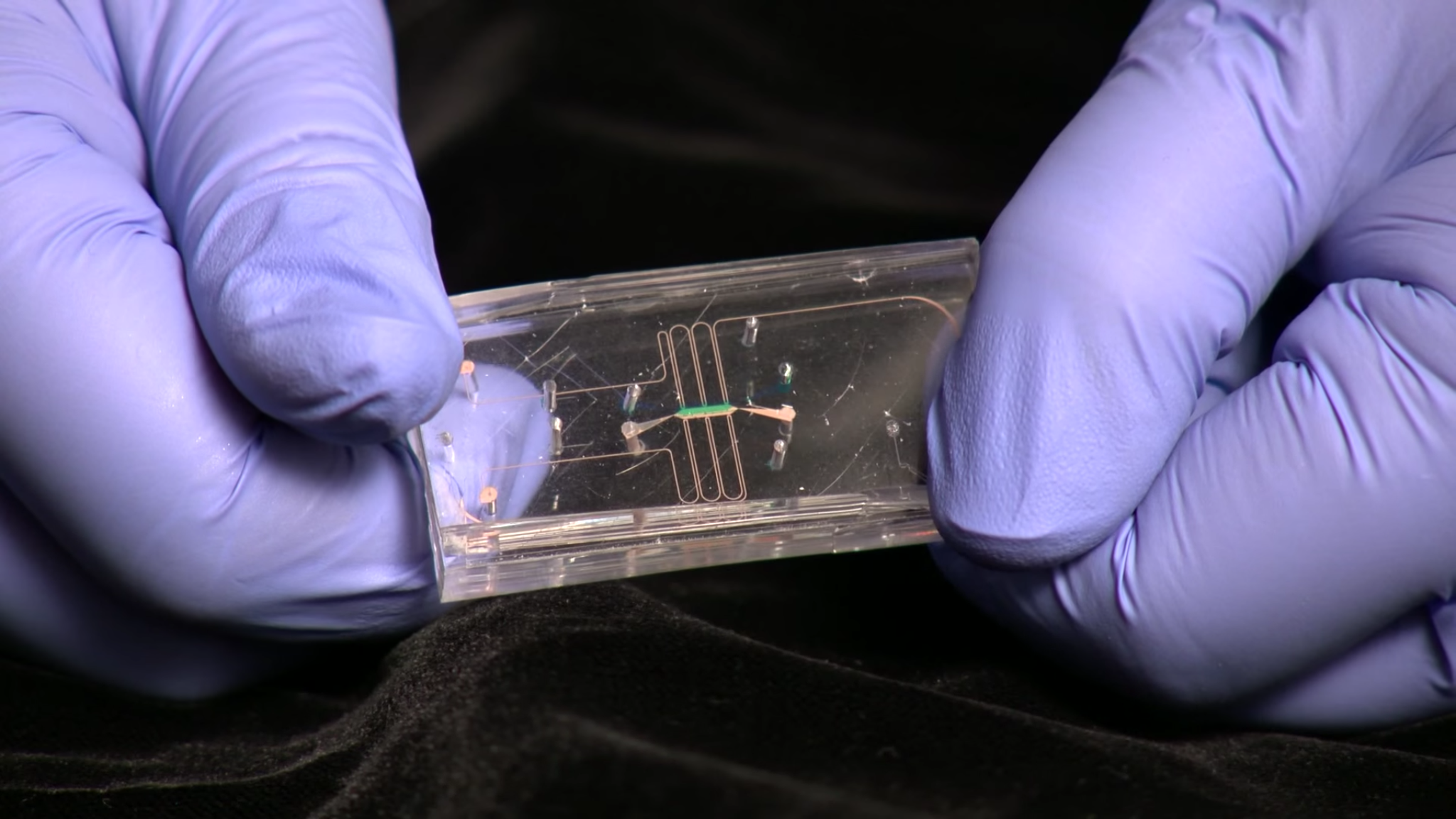 NIH NCATS tissue chips flexible plastic with microchannels