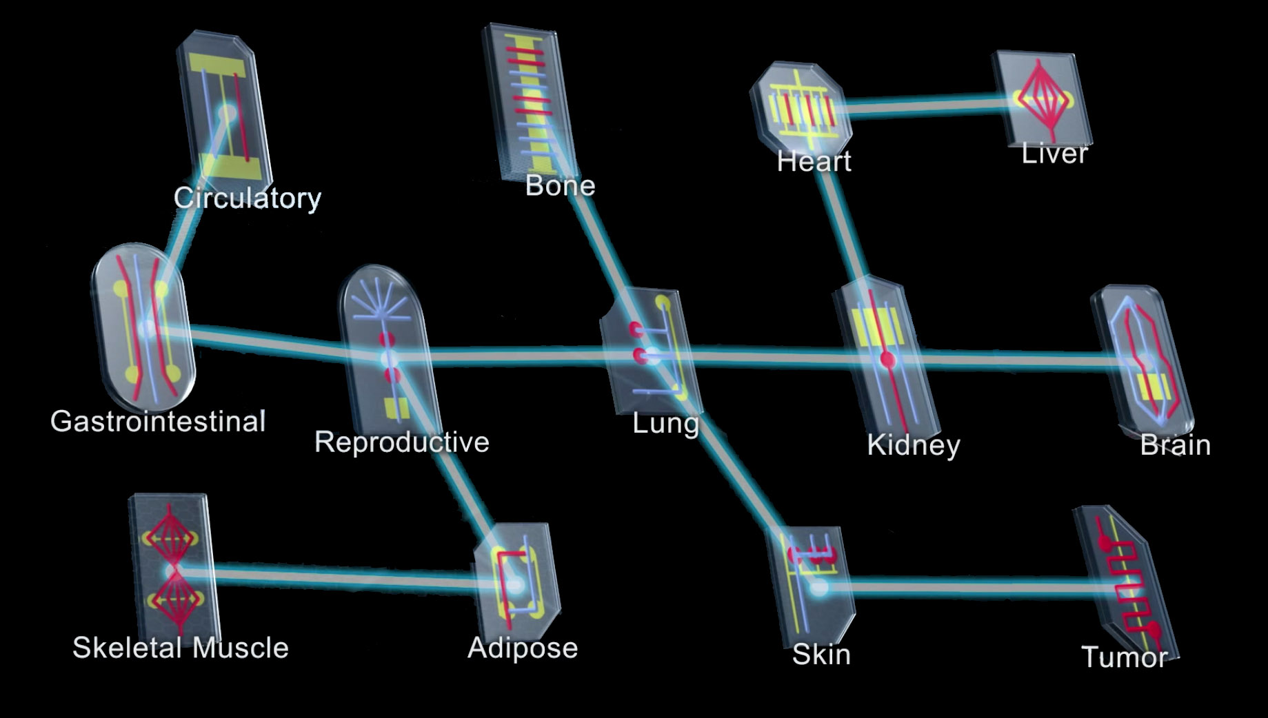 NIH NCATS network of tissue chips or organs on chips