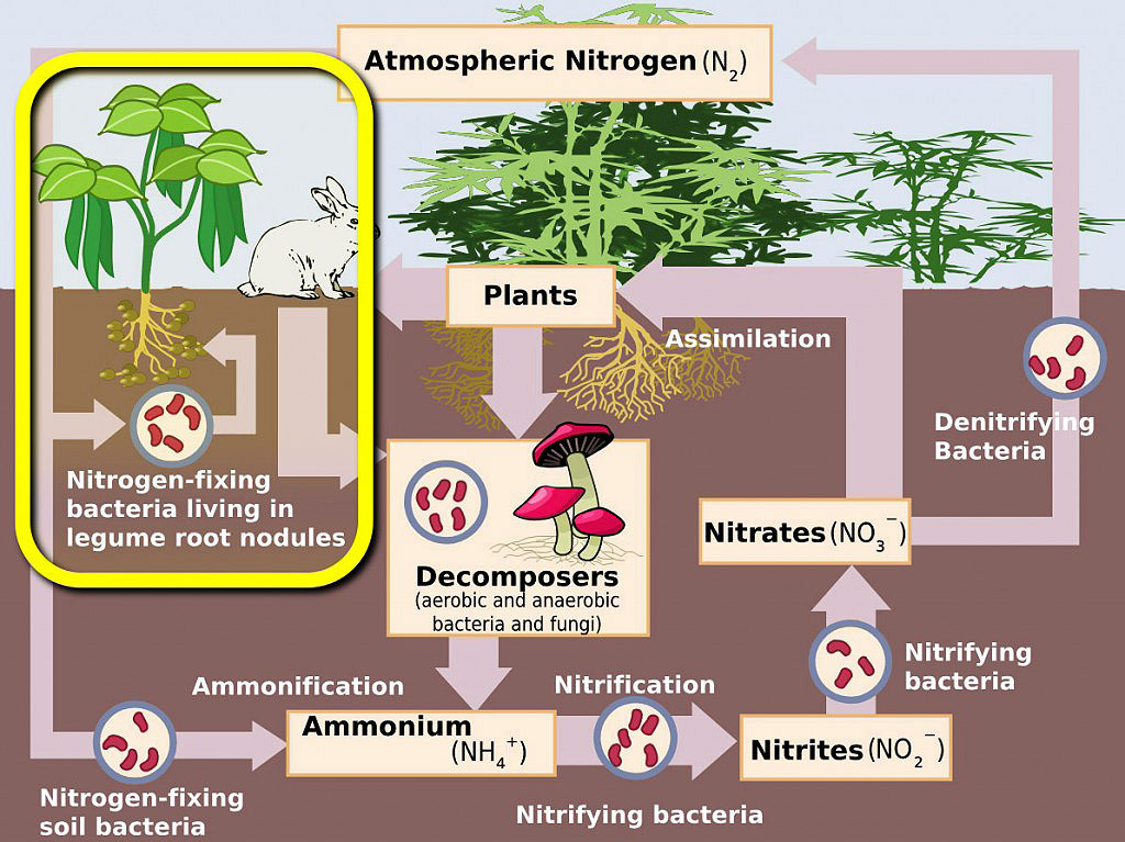 atmospheroc nitrogen cycle